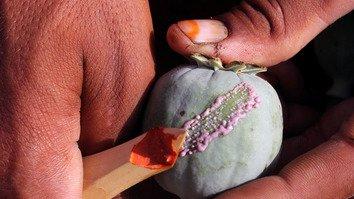 Узбекистан и Афганистан совместно работают над тем, чтобы подорвать наркоторговлю