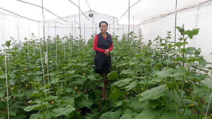Gulnara Soltobayeva, a cucumber farmer, stands in her greenhouse in Naryn Province in September 2017. [Asker Sultanov]