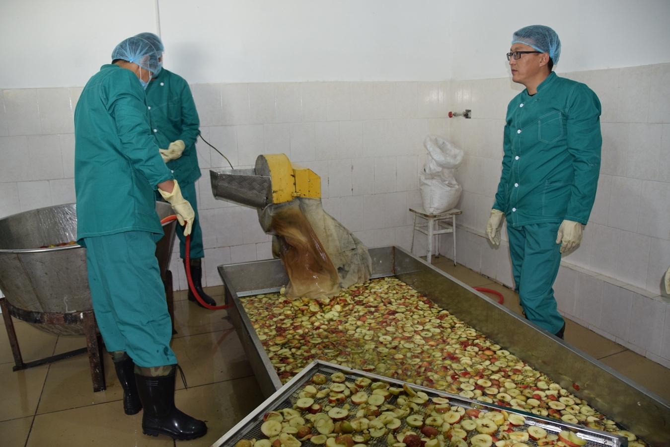 USAID koʻmagi ostida faoliyat yuritayotgan zavodlar Qirgʻiz fermerlariga mahsulotlarini qayta ishlash va eksport qilishda yordam bermoqda