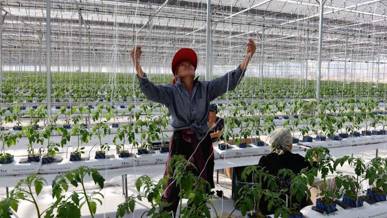 Органические удобрения и возможность избежать использования сильных пестицидов позволяют местным фермерам поставлять высококачественные фрукты и овощи на внутренний и экспортный рынки. [Всемирный банк]