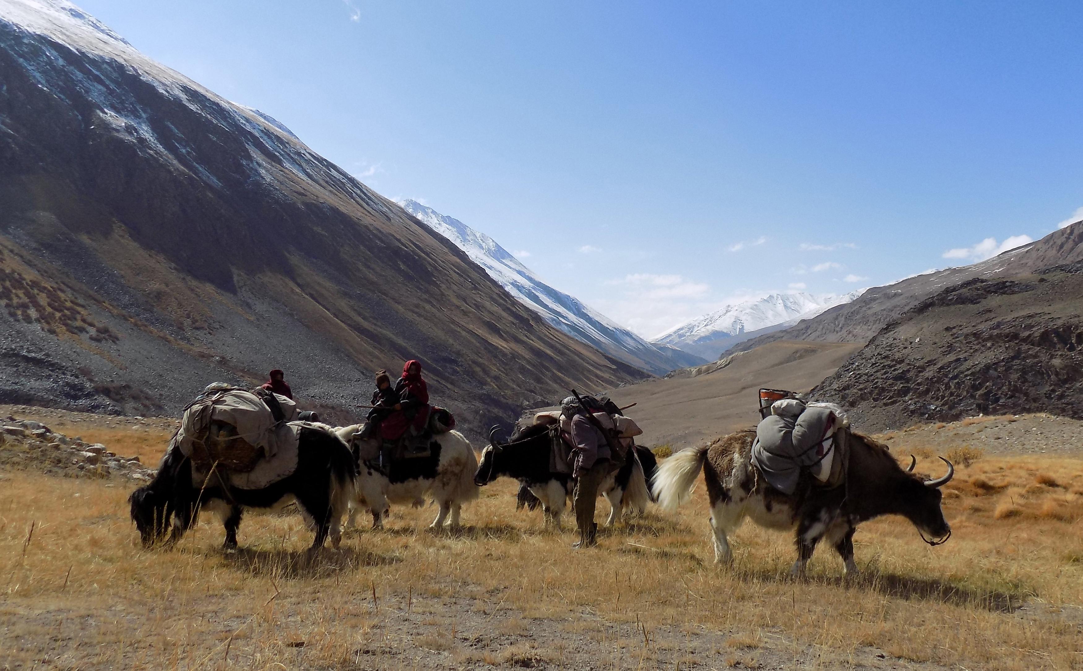 На этом фотоснимке от 7 октября показаны этнические кыргызские кочевые семьи, путешествующие на яках в Ваханском коридоре в Афганистане. [Гоар Аббас / АФП]