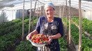 Strawberry project helps Tajik women achieve financial independence
