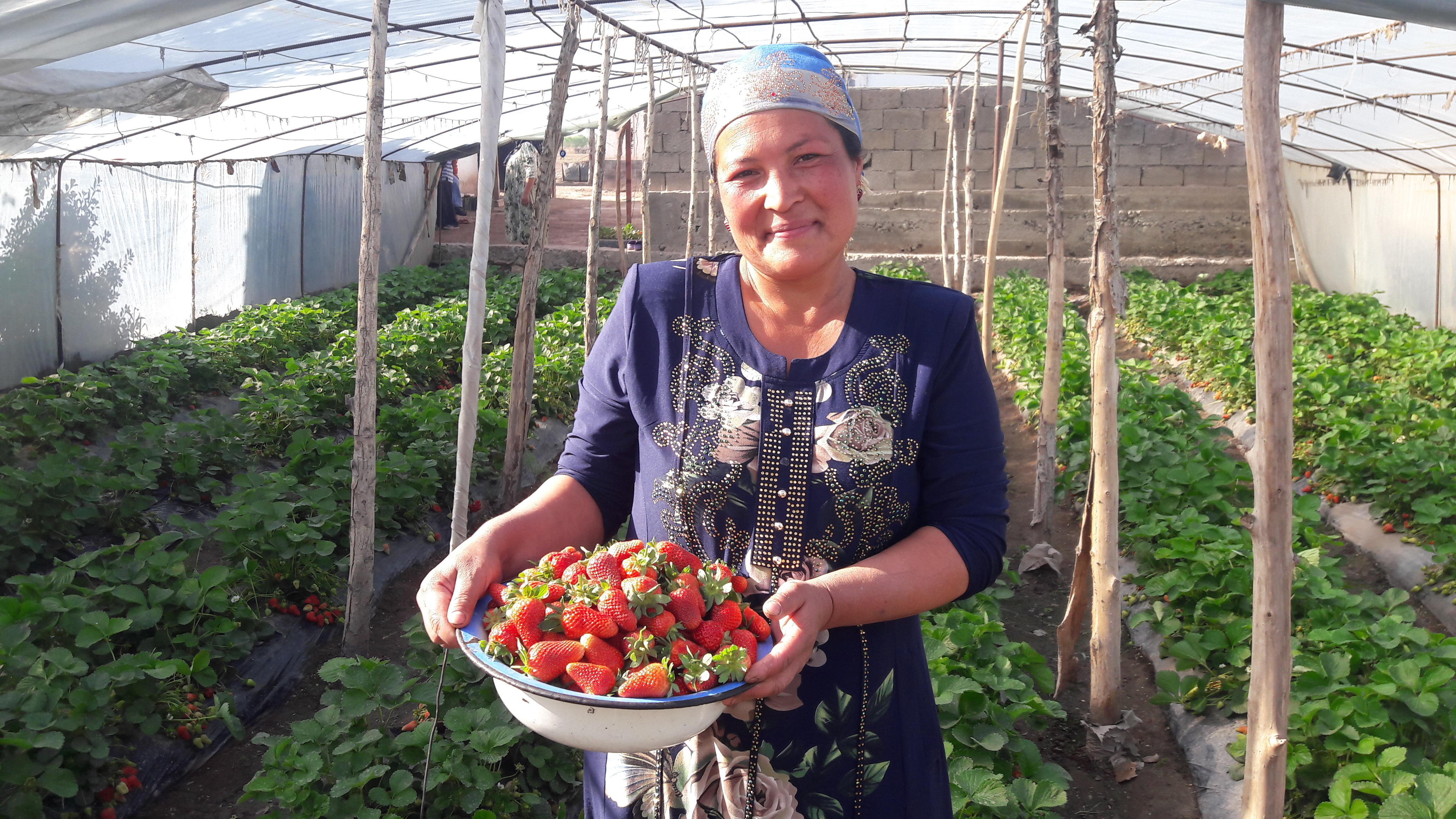 Strawberry project helps Tajik women achieve financial independence