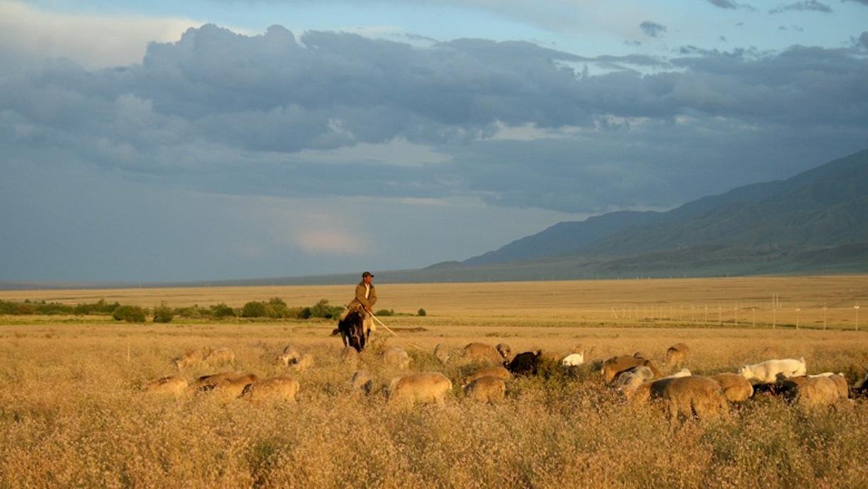 Тысячи казахов отправляются на север с мечтами о новой жизни