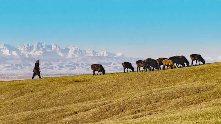 Глобальное потепление влияет на образ жизни сельских жителей. Засушливый климат заставляет людей пасти овец все выше и выше в горах, где трава лучше, чем в низинах. На этом недатированном фото пастбище в Джалал-Абадской области, Кыргызстан[Марат Сайранбаев]