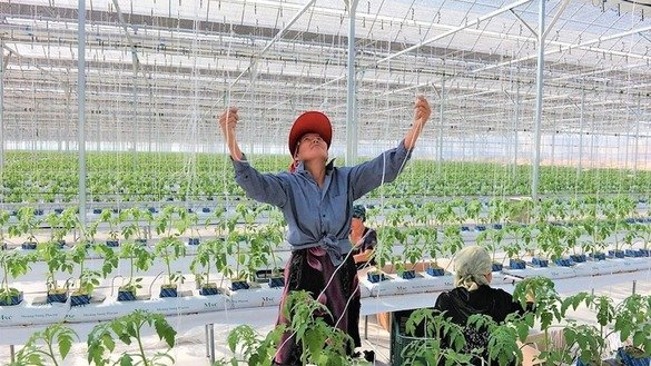 An Uzbek farmer works in a greenhouse in this undated photo. The World Bank is helping Uzbek women prosper in agriculture. [World Bank Group]