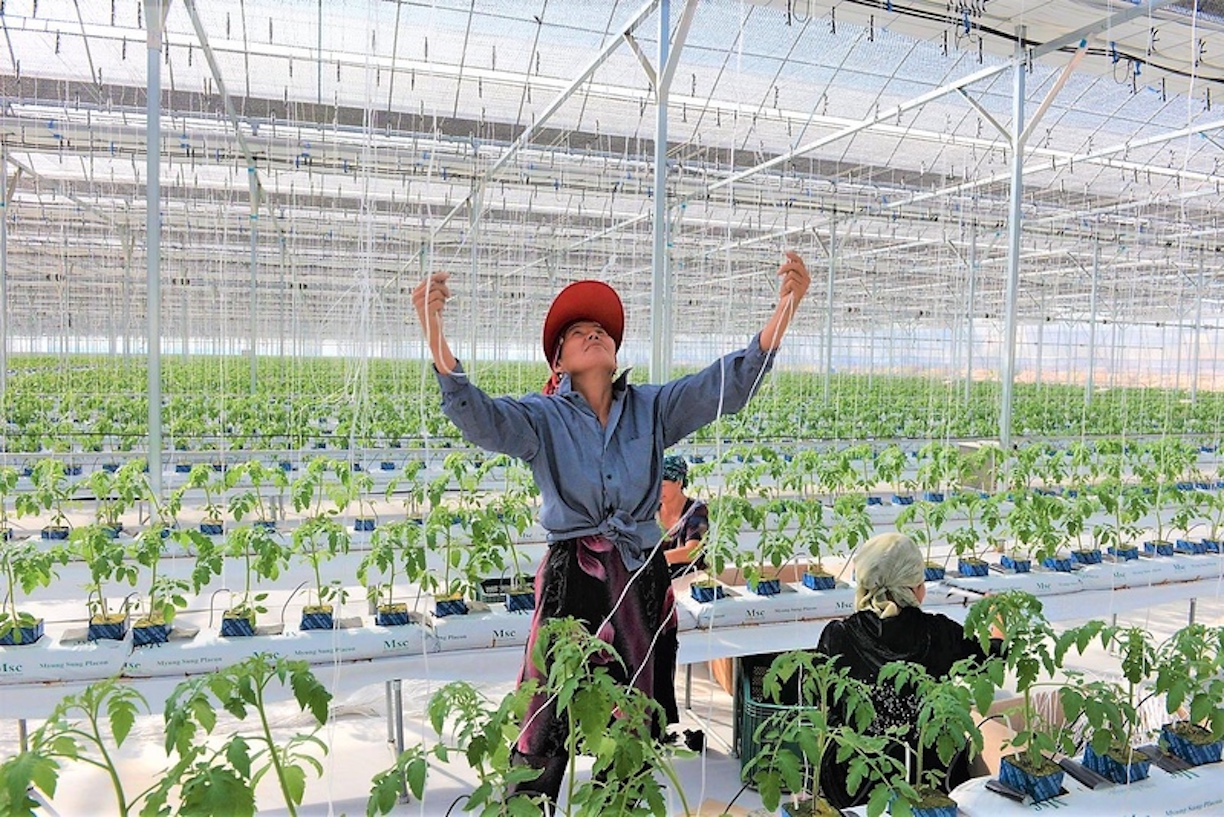 Female farmers, entrepreneurs undergo training in Tashkent