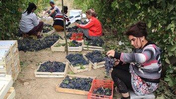 Uzbekistan sets sights on fine winemaking